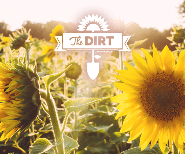 The Dirt - Flower Power Beyond The Smiles...
